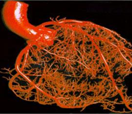 Ganoderma come rimedio alle coronaria ostruite